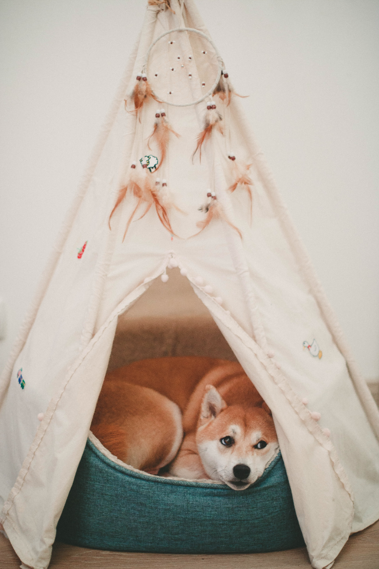 dog lying on bed in a tent