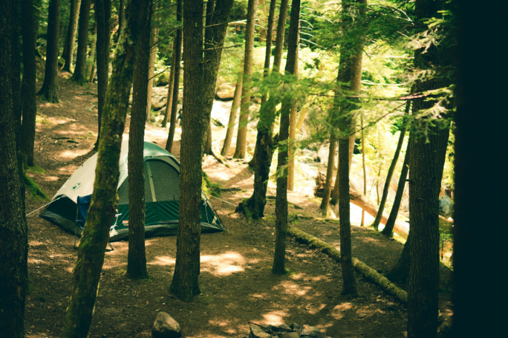 Forest tree adventure tent