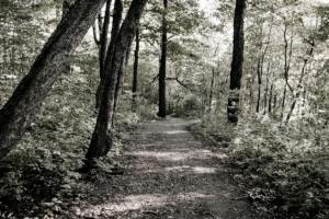 Ozark Trail